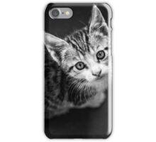 Young cat in box close up iPhone Case/Skin