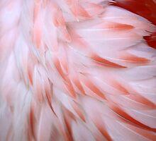 Flamingo #5 by ALICIABOCK