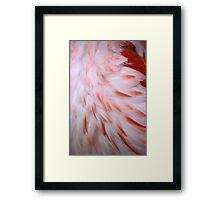 Flamingo #5 Framed Print