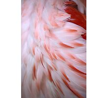 Flamingo #5 Photographic Print