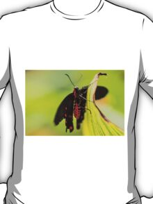 Butterfly - Black & Red T-Shirt