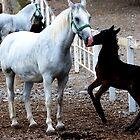 Joyful foal by loiteke