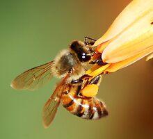 Agile bee by loiteke