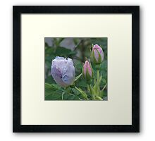 Autumn Buds Framed Print