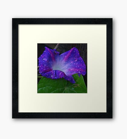 Tears for the Morning Framed Print