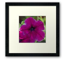 Purple and Black Framed Print