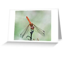 Male Common  Darter Greeting Card