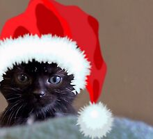 Little Baby Christmas Cattitude by Beth McConnell