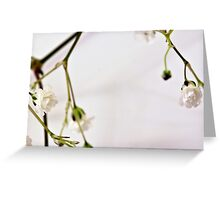 Baby's Breath Macro Greeting Card