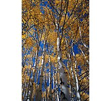 Shadows in the Aspen Photographic Print