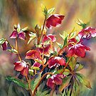 Backlit Hellebores by Ann Mortimer