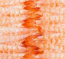 Shrimp Sushi / Sashimi Close Up by snkatk