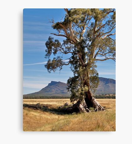 Cazneaux Tree, Wilpena, Flinders Ranges, SA. Canvas Print