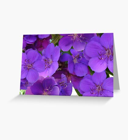 Beautiful Blooms Greeting Card