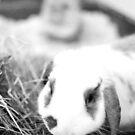 bunny life by Savannah Regier