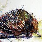 short-beaked echidna by pamfox