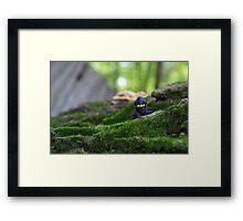 Forest Ninja  Framed Print