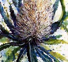 Banksia by pamfox