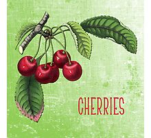 Cherries Botanical Art on Green Photographic Print