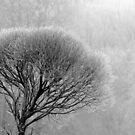 17.12.2016: Leafless Tree in Winter Fog by Petri Volanen