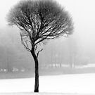 17.12.2016: Leafless Tree in Winter Fog II by Petri Volanen