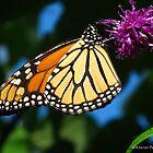 Monarch flight by MarianBendeth