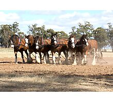 Beautiful Clydesdale Team.... ploughing ..... Photographic Print