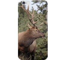Bull Elk One iPhone Case/Skin