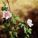 blossoms by Savannah Regier