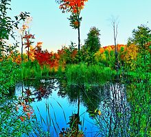 Fall Water Tree by Adam Kuehl