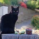 Black cat I by Lynn Starner