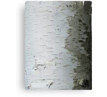 White Bark Canvas Print