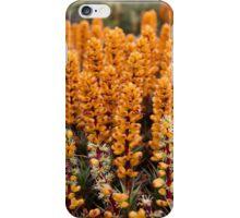 Richea scoparia iPhone Case/Skin