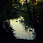 pond in the twilight by Savannah Regier