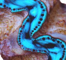 Coco Islands Maxima Clam  Sticker