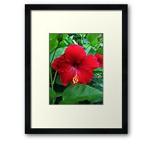 Red Hibiscus Framed Print