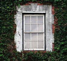The Ivy Window by Nathan Little