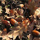 Autumn by chiaraSibona