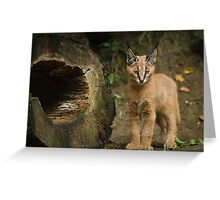 Little Caracal Greeting Card