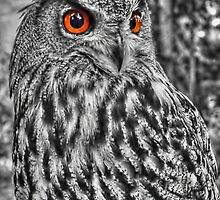 Long Eared Owl (Black and White) by © Steve H Clark Photography