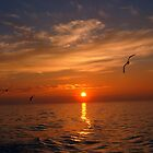 Sunset with seagulls by John Morris
