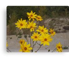 .....yellow flowers for you. italia - europa -..my beloved Anna ! .adorata Anna sei solo  tu...annamaria.  - 3500 visualizzaz.2014.FEATURED RB EXPLORE 15 GENNAIO 2012-- Canvas Print