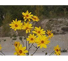 .....yellow flowers for you. italia - europa -..my beloved Anna ! .adorata Anna sei solo  tu...annamaria.  - 3500 visualizzaz.2014.FEATURED RB EXPLORE 15 GENNAIO 2012-- Photographic Print