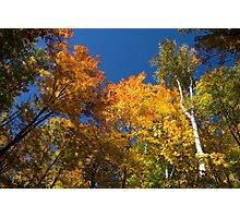 Glorious Fall Colors - Just Lift Your Head Photographic Print