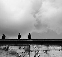 """Presenting: """"The Birds"""" by MrAnthonyPrice"""