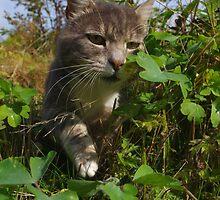 The garden hunter by turniptowers
