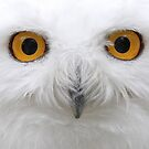Snowy Eyes - Snowy Owl by Jim Cumming