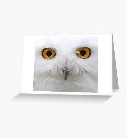 Snowy Eyes - Snowy Owl Greeting Card