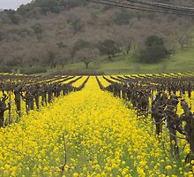 Mustard between the vines by randymir