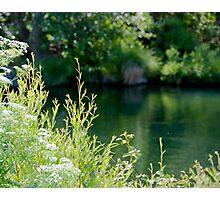 Putah Creek Photographic Print